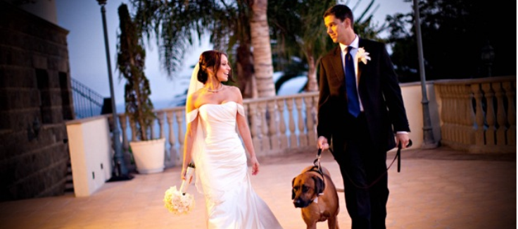 Real California Wedding (with Dog and Food Truck!)