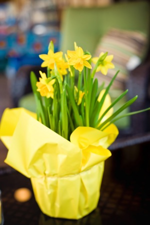 daffodils in yellow pot
