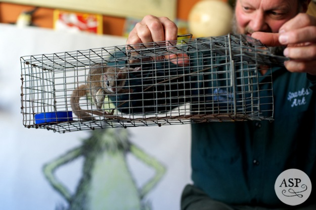 animal trainer at party with flying squirrel